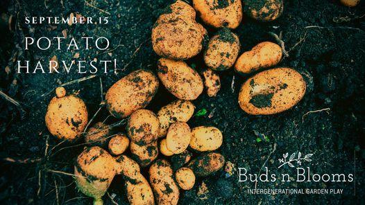 Buds n Blooms Potato Harvest