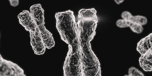Epigenetik & Nutrigenetik