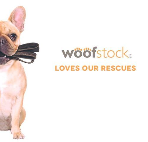 Woofstock Dog Festival -Woodbine Park Toronto
