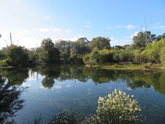 Planting at Mary Carroll Wetlands