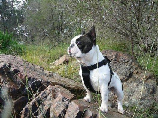 Bulldog Walk & Wildflowers
