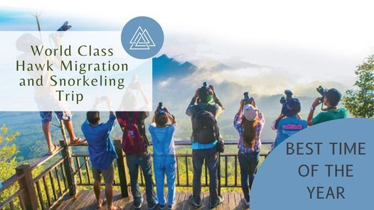 World Class Hawk Migration and Snorkeling Trip