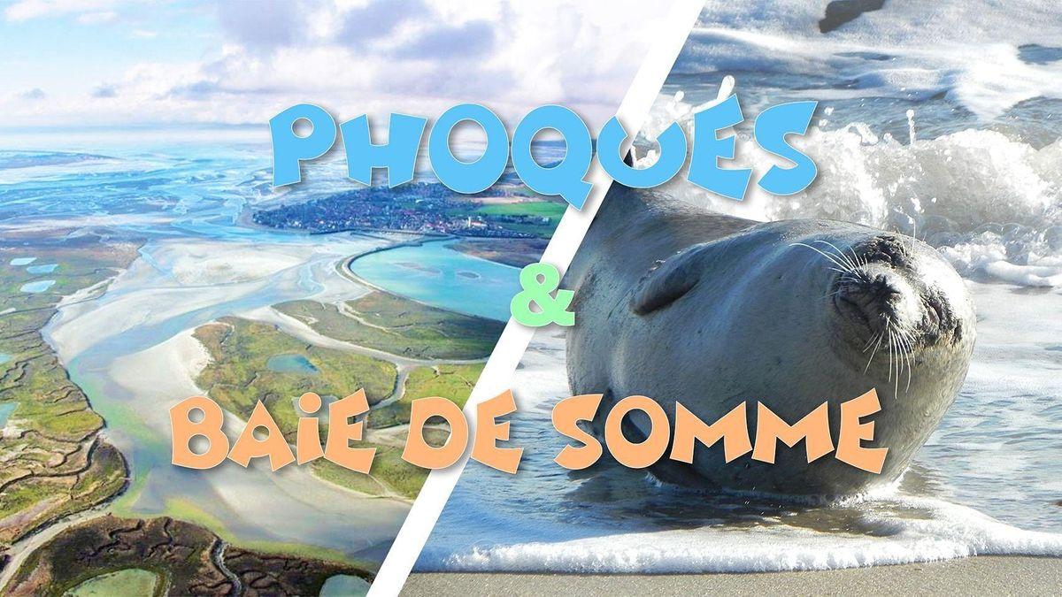 D\u00e9couverte des Phoques sauvages & Baie de Somme