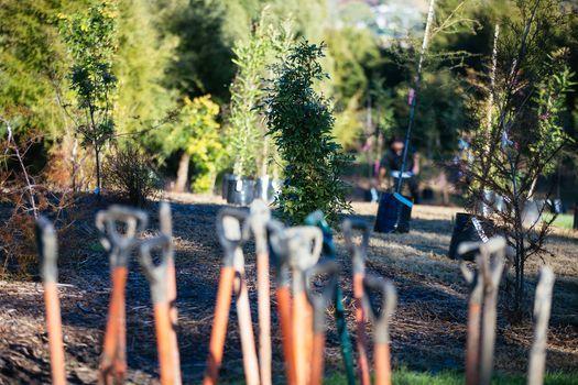 Corporate Matariki Planting, Totara Park