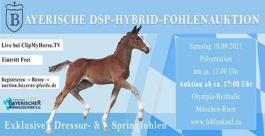 1. Bayerische DSP-Hybrid-Fohlenauktion