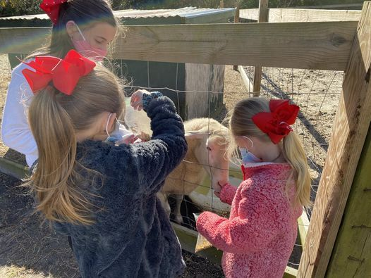 Open Farm Day Admission Prices Below Old Mcfaye S Farm Castle Hayne 24 January 2021