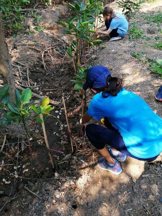 Mangrove Planting, Birdwatching and Boardwalks at Bang Pu
