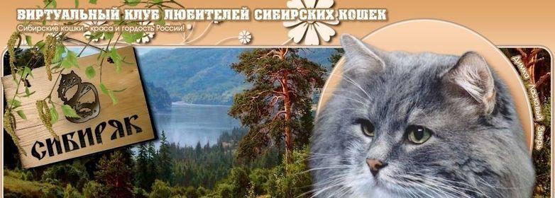 Wcf клубы в москве сфера клуб в москве