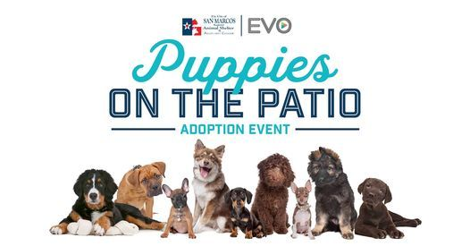 Puppies on the Patio: Adoption Event