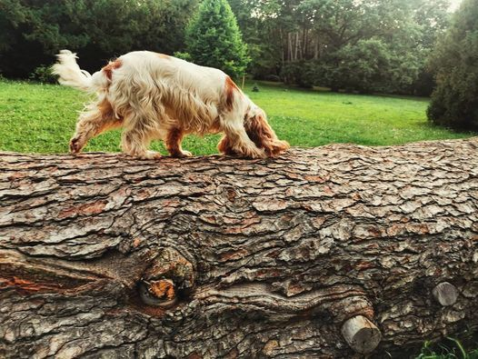Good Dog Szimat suli a Dog Gardenben