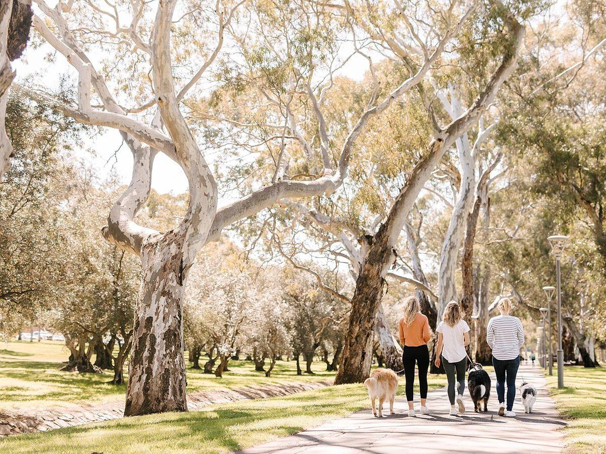 WellFest Adelaide - Hounds on Hutt  @ Victoria Park \/ Pakapakanthi