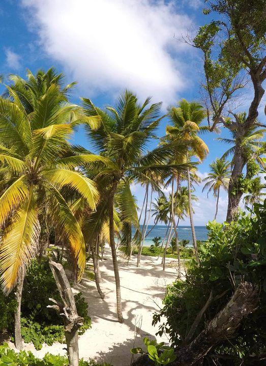 Caribean Queen : Ron & Rum