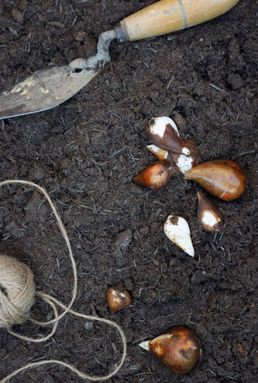 Bulb Planting Workshop