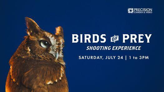 Birds of Prey Shooting Experience