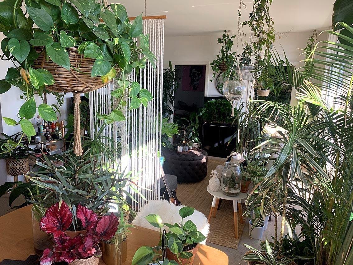 Indoor plant workshop with Markus Hamence