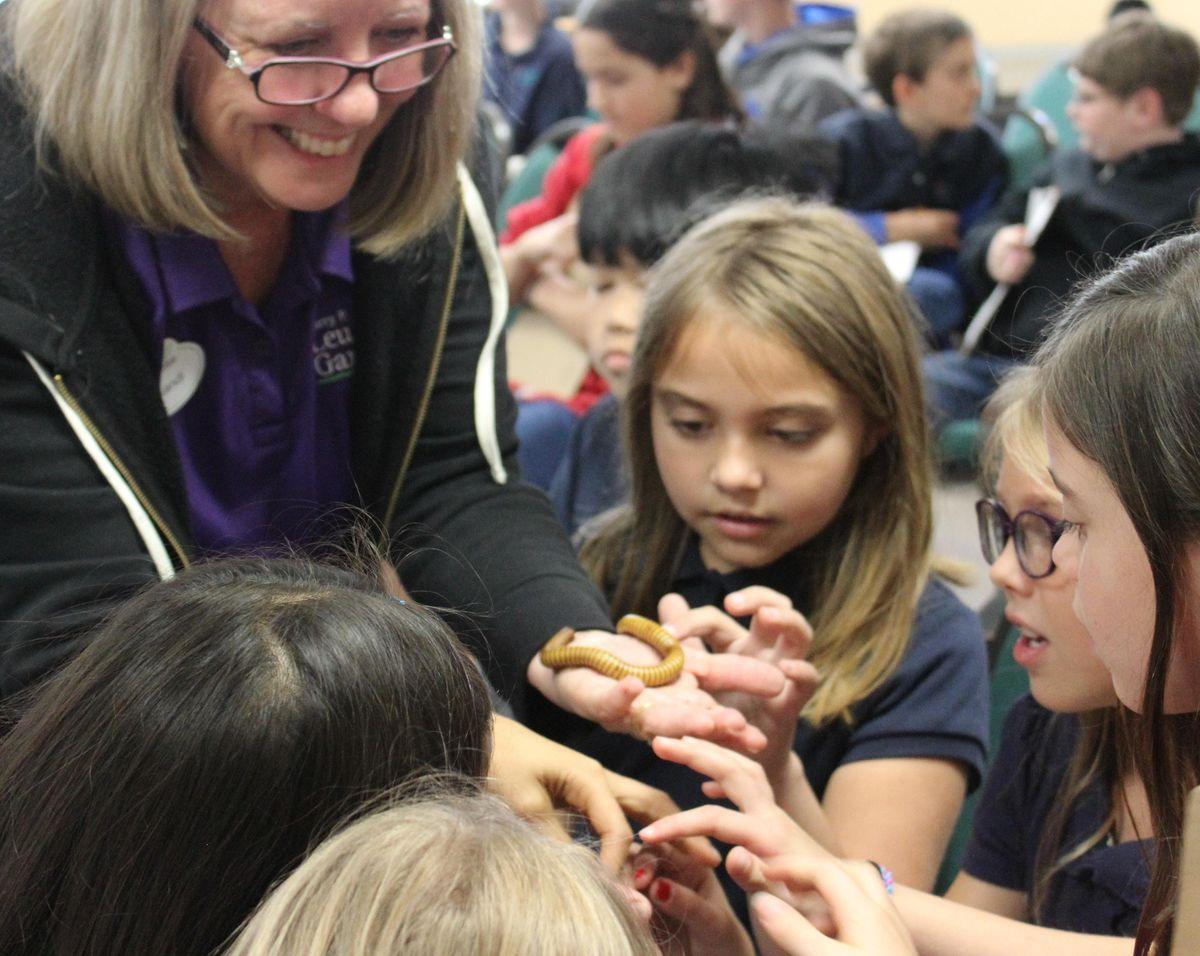 Home School - Incredible Invertebrates