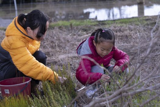 Our Park, Our Place: Community Planting Day