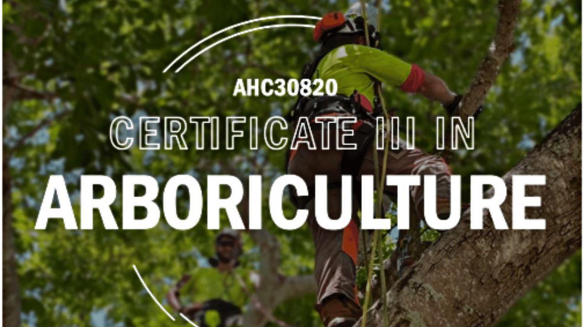 Townsville | AHC30820 Certificate III in Arboriculture