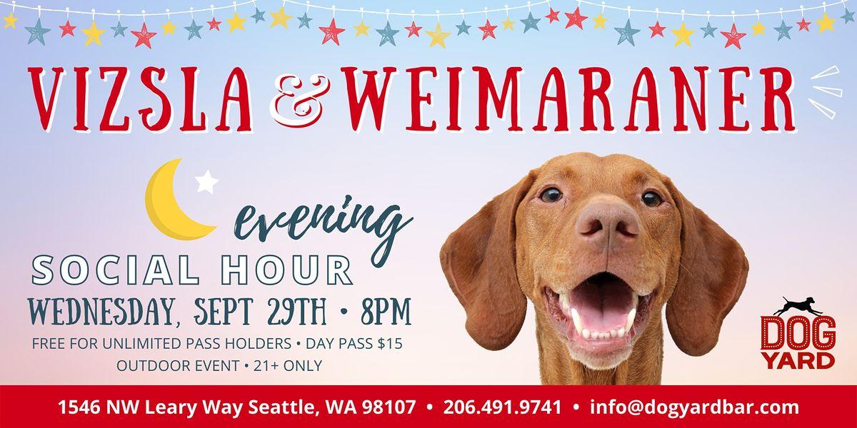 Vizsla & Weimaraner Evening Meetup at the Dog Yard